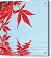 Maple Reflection Acrylic Print