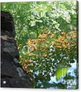 Maple Reflections Acrylic Print