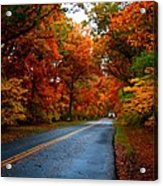 Maple Road Acrylic Print