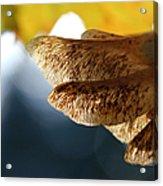 Maple Seeds 2 Acrylic Print