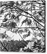 Maple Sunset - Paint Bw Acrylic Print