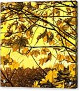 Maple Sunset - Paint Acrylic Print