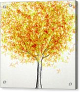 Maple Tree 1 Acrylic Print