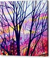 Maple Tree Sunset Acrylic Print