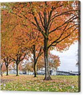 Maple Trees In Portland Downtown Park In Fall Acrylic Print