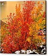 Maples Along The Palisades Acrylic Print