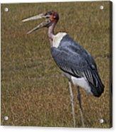 Marabou Stork   #0176 Acrylic Print