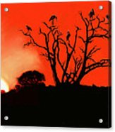 Marabou Tree Acrylic Print