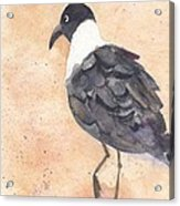 March Of The Laughing Gull Acrylic Print