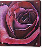 March Rose Acrylic Print
