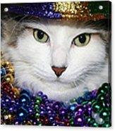 Mardi Gras Kitty Acrylic Print