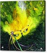 Mardi Gras On Green Acrylic Print