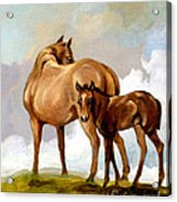 Mare And Foal Acrylic Print by Patricia Howitt
