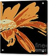 Marguerite Acrylic Print