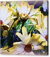 Marigold Blooms Acrylic Print