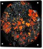 Marigold Fire Acrylic Print