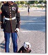 Marine And Bulldog Acrylic Print