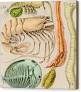 Marine Fauna Acrylic Print