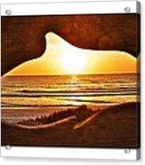 Marineland's Sunrise Dolphin Acrylic Print