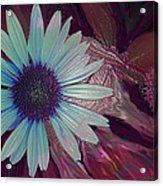 Maroon Mood Acrylic Print