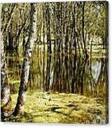 Marsh At Cheadle Lake Acrylic Print