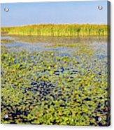 Marsh At Edge Of Lake Okeechobee Acrylic Print