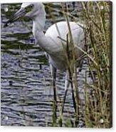 Marsh Fishing Acrylic Print