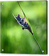 Marsh Flower Acrylic Print