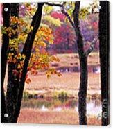 Marsh In Fall Acrylic Print