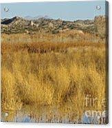 Marsh Lands In Wildlife Refuge Acrylic Print