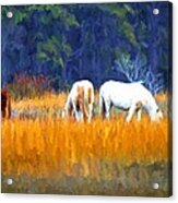 Marsh Ponies Acrylic Print