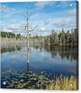 Marsh Reflections Acrylic Print