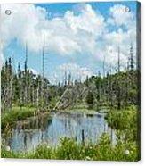 Marsh Scene Acrylic Print