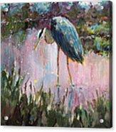 Marsh Time Acrylic Print