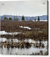 Marsh Tones Acrylic Print