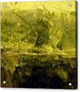 Marsh Under Acrylic Print