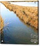 Marsh4 Acrylic Print