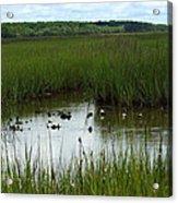 Marshlands Around Hilton Head Island Acrylic Print