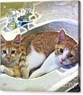 Mary's Cats Acrylic Print