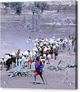 Masai Herder Boy Acrylic Print