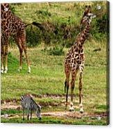 Masai Mara Wildlife Scene Acrylic Print