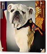 Mascot Of The United States Marine Corps Acrylic Print
