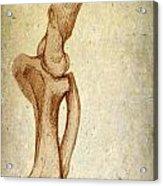Mastodon Leg Bones Acrylic Print