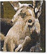 Mat-su Moose Acrylic Print