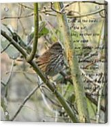 Mathew 6 Vs 26 Thrush Acrylic Print