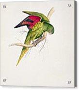 Matons Parakeet Acrylic Print