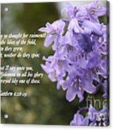 Matthew 6 Verses 28 And 29 Acrylic Print