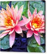 Maui Lotus Blossoms Acrylic Print