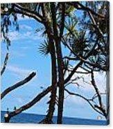 Maui Tree Silhouette Acrylic Print