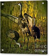 May I Have This Dance Acrylic Print